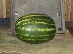 Семена арбуза АСХ 5425 F1