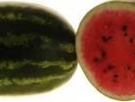 семена арбуза Triumfator F1