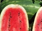 Семена арбуза Флорида Свит